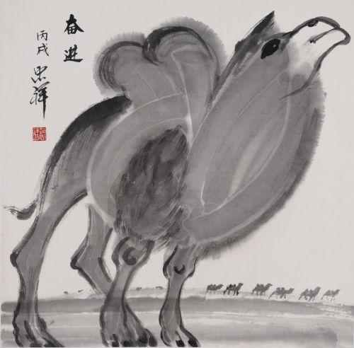 赵忠祥 骆驼